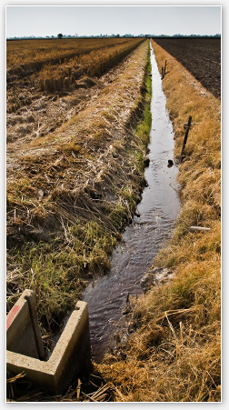 Photograph of surface water canal in field